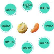 柚子自动分拣机